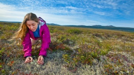 Dr. Margaret Torn at an NGEE field test site near Council, Alaska. Lawrence Berkeley National Laboratory – Roy Kaltschmidt, photographer.